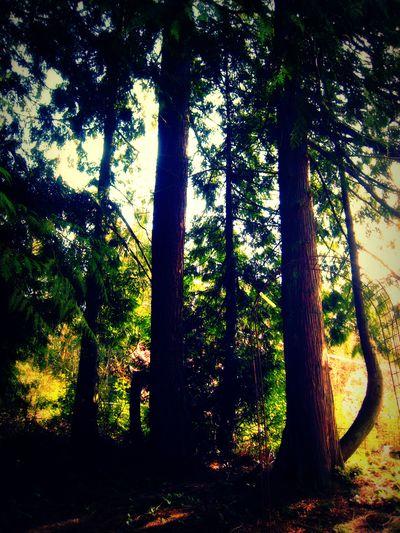 Trees lomo