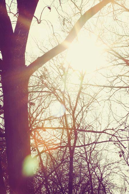 Treeflare_3