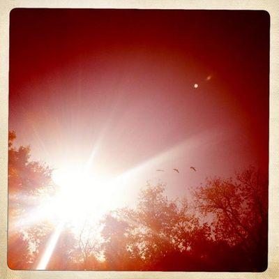 Birds sunray